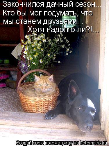Котоматрица: Закончился дачный сезон... Кто бы мог подумать, что мы станем друзьями... Хотя надолго ли?!...