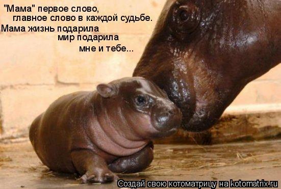 """Котоматрица: """"Мама"""" первое слово, главное слово в каждой судьбе. Мама жизнь подарила мир подарила мне и тебе..."""