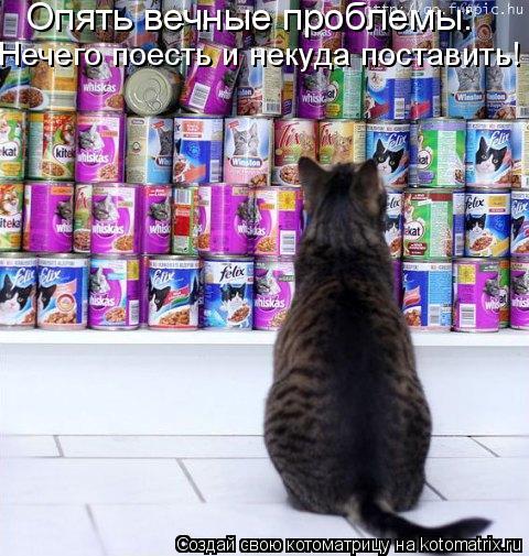 Котоматрица: Опять вечные проблемы: Нечего поесть и некуда поставить!