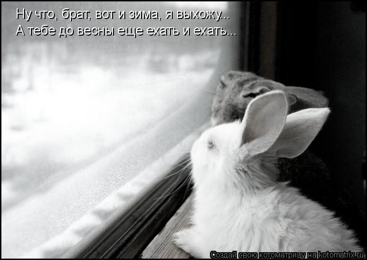 Котоматрица: Ну что, брат, вот и зима, я выхожу... А тебе до весны еще ехать и ехать...