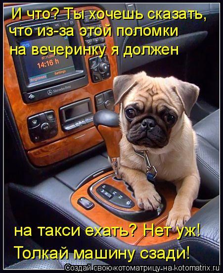 Котоматрица: И что? Ты хочешь сказать, что из-за этой поломки на вечеринку я должен на такси ехать? Нет уж! Толкай машину сзади!