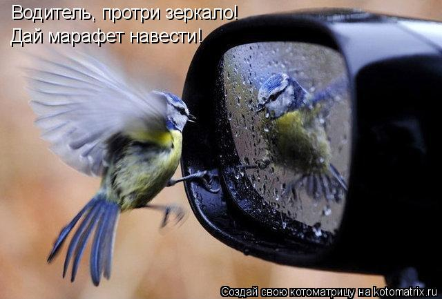 Котоматрица: Водитель, протри зеркало! Дай марафет навести!