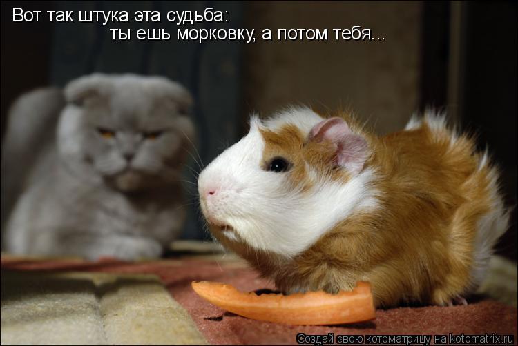 Котоматрица: Вот так штука эта судьба: ты ешь морковку, а потом тебя...