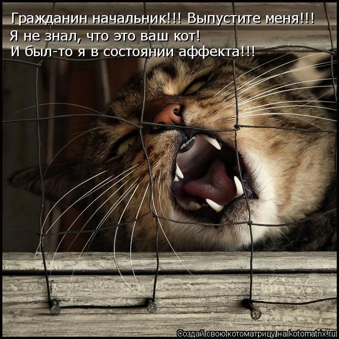 Котоматрица: Гражданин начальник!!! Выпустите меня!!!  Я не знал, что это ваш кот!  И был-то я в состоянии аффекта!!!