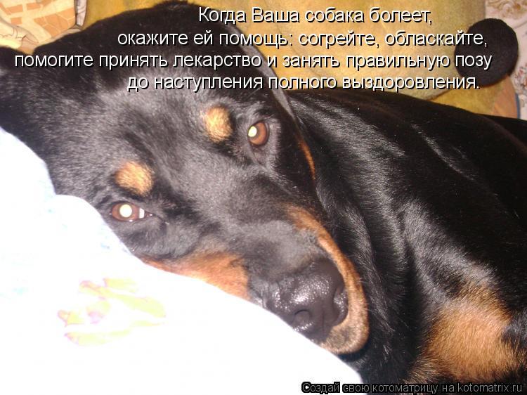 Котоматрица: Когда Ваша собака болеет, окажите ей помощь: согрейте, обласкайте, помогите принять лекарство и занять правильную позу до наступления полн