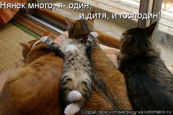 Котоматрица: Нянек много, я- один, и дитя, и господин!