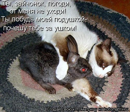 Котоматрица: Ты, зайчонок, погоди, от меня не уходи! Ты побудь моей подушкой- почешу тебе за ушком!