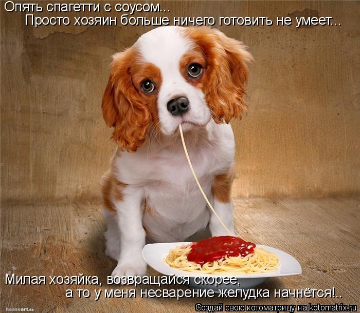 Котоматрица: Опять спагетти с соусом... Просто хозяин больше ничего готовить не умеет... Милая хозяйка, возвращайся скорее, а то у меня несварение желудка