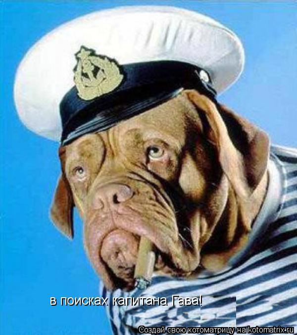 Котоматрица: в поисках капитана Гава!