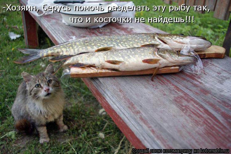 Котоматрица: -Хозяин, берусь помочь разделать эту рыбу так,  что и косточки не найдешь!!!