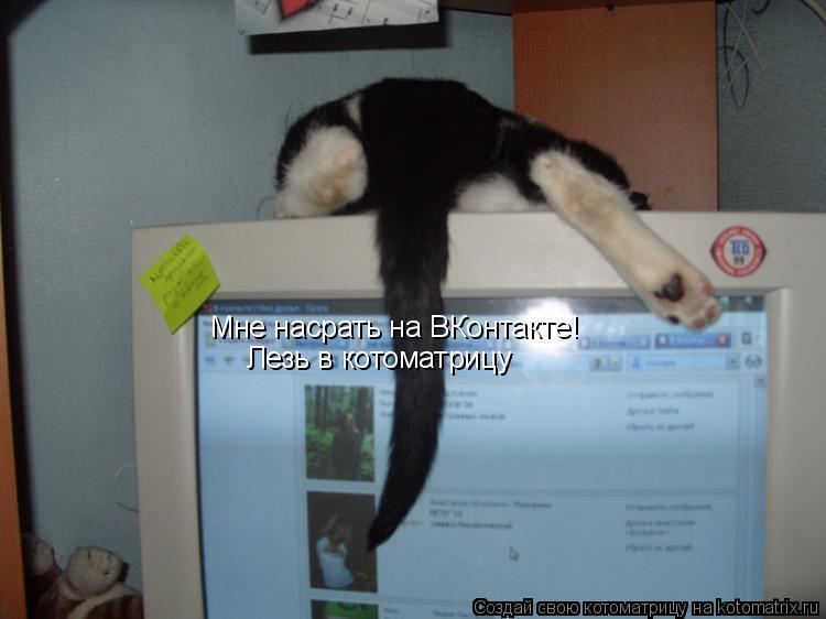 Котоматрица: Мне насрать на ВКонтакте! Лезь в котоматрицу