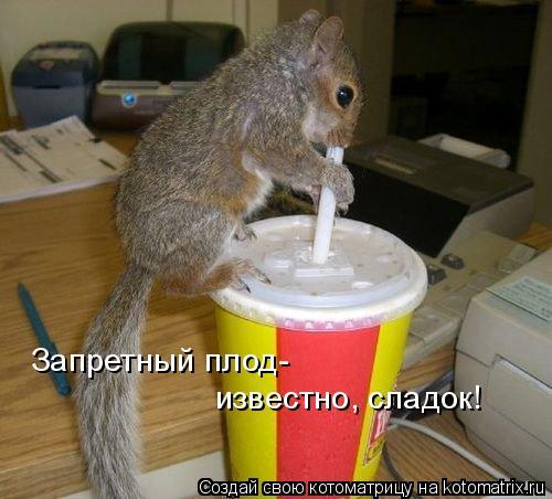Котоматрица: Запретный плод- известно, сладок!
