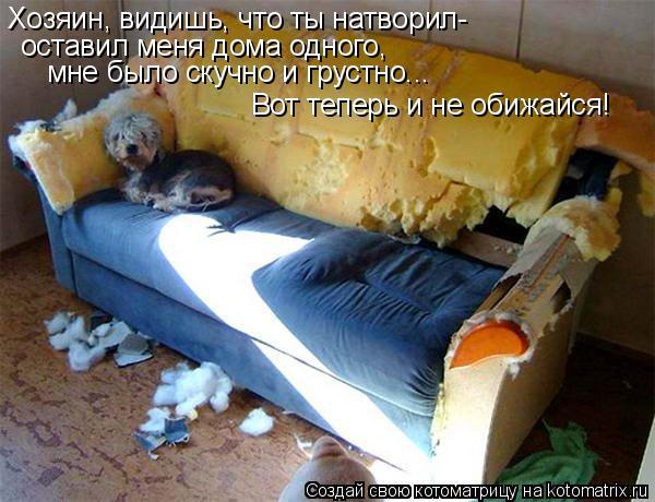 Котоматрица: Хозяин, видишь, что ты натворил- оставил меня дома одного, мне было скучно и грустно... Вот теперь и не обижайся!