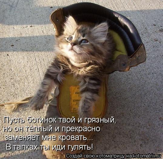 Котоматрица: Пусть ботинок твой и грязный, но он тёплый и прекрасно заменяет мне кровать... В тапках ты иди гулять!