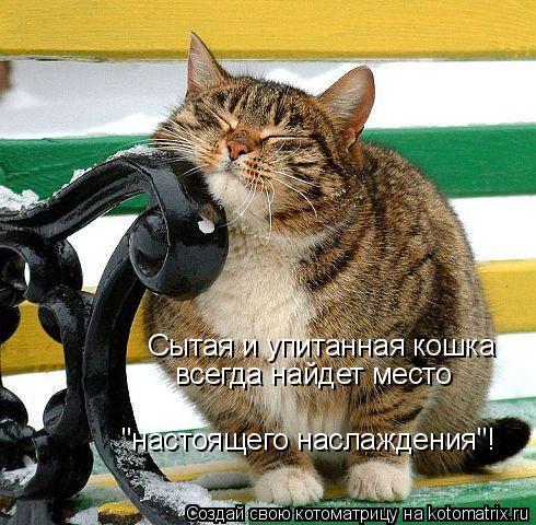 """Котоматрица: Сытая и упитанная кошка всегда найдет место """"настоящего наслаждения""""!"""