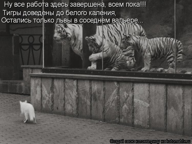 Котоматрица: Ну все работа здесь завершена, всем пока!!! Тигры доведены до белого каления,  Остались только львы в соседнем вальере...