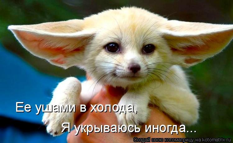 Котоматрица: Ее ушами в холода,  Я укрываюсь иногда...