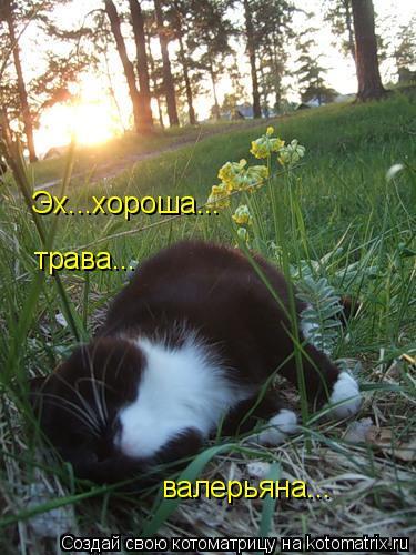 Котоматрица: Эх...хороша... трава... валерьяна...