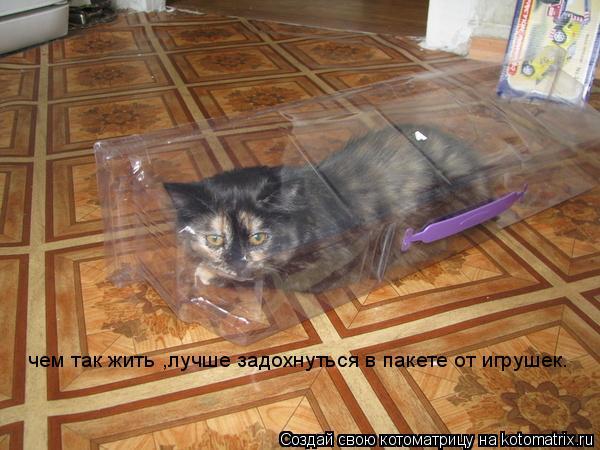 Котоматрица: чем так жить ,лучше задохнуться в пакете от игрушек.