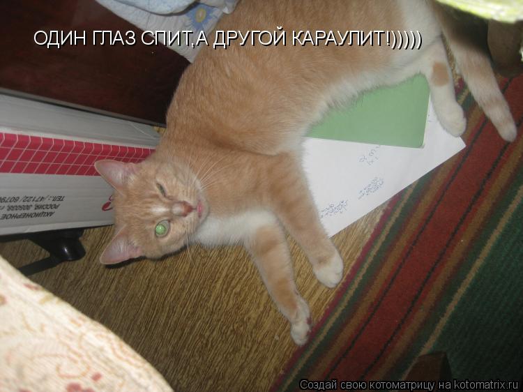 Котоматрица: ОДИН ГЛАЗ СПИТ,А ДРУГОЙ КАРАУЛИТ!)))))