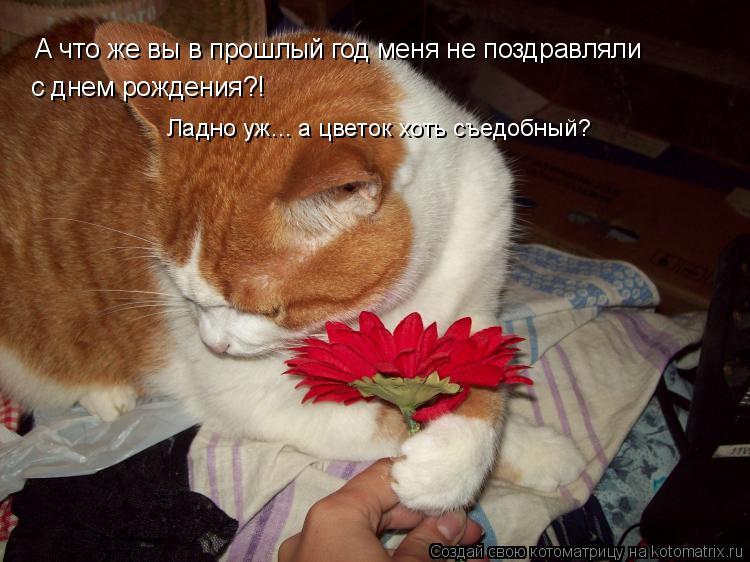 Котоматрица: А что же вы в прошлый год меня не поздравляли с днем рождения?! Ладно уж... а цветок хоть съедобный?