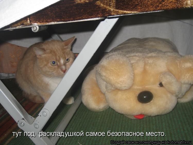 Котоматрица: тут под  раскладушкой самое безопасное место.
