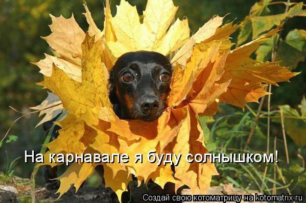 Котоматрица: На карнавале я буду солнышком!