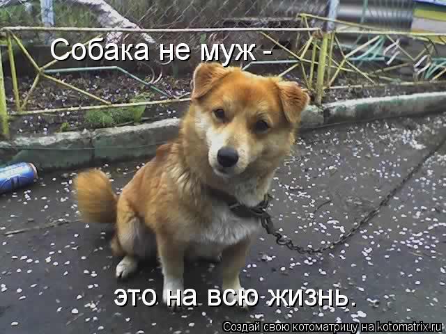 Котоматрица: Собака не муж - это на всю жизнь.