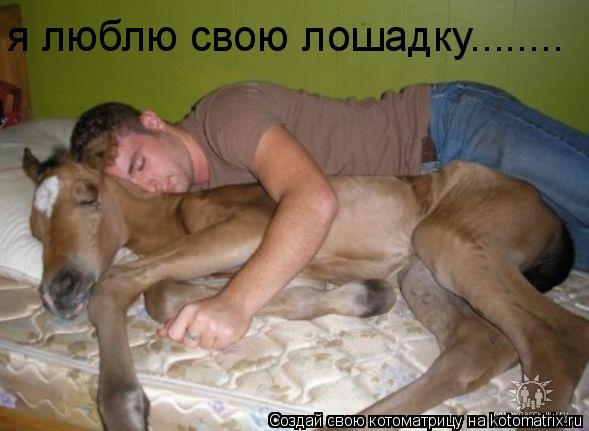 Котоматрица: я люблю свою лошадку........