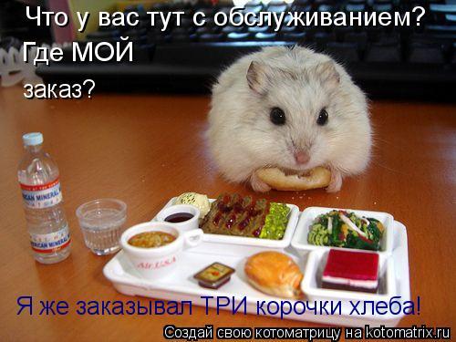 Котоматрица: Я же заказывал ТРИ корочки хлеба! Что у вас тут с обслуживанием? Где МОЙ заказ?
