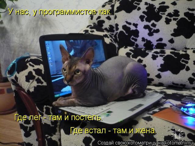 Котоматрица: У нас, у программистов как.  Где лег - там и постель. Где встал - там и жена.