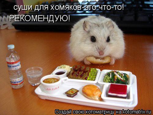 Котоматрица: суши для хомяков-это что-то! РЕКОМЕНДУЮ!