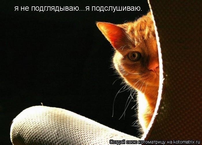 Котоматрица: я не подглядываю...я подслушиваю.