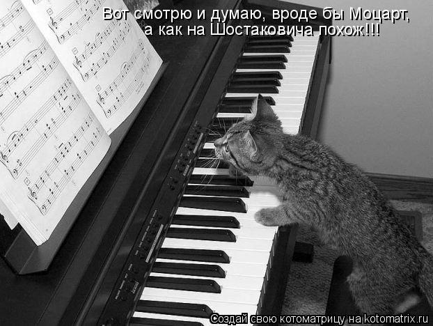 Котоматрица: Вот смотрю и думаю, вроде бы Моцарт, а как на Шостаковича похож!!!