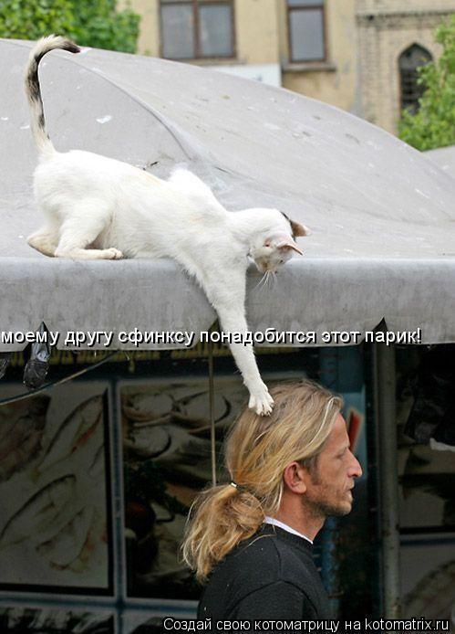 Котоматрица: моему другу сфинксу понадобится этот парик!