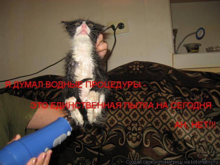 Котоматрица: Я ДУМАЛ ВОДНЫЕ ПРОЦЕДУРЫ - ЭТО ЕДИНСТВЕННАЯ ПЫТКА НА СЕГОДНЯ АН, НЕТ!!!