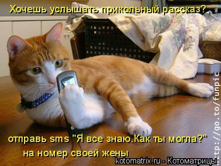 """Котоматрица: Хочешь услышать прикольный рассказ? отправь sms """"Я все знаю.Как ты могла?"""" на номер своей жены"""