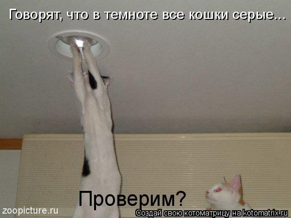 Котоматрица: Говорят, что в темноте все кошки серые... Проверим?