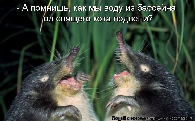 Котоматрица: - А помнишь, как мы воду из бассейна под спящего кота подвели?