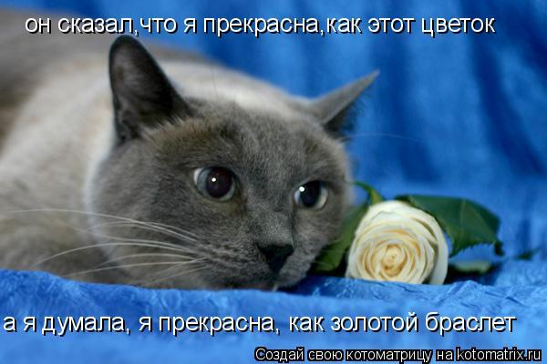 Котоматрица: он сказал,что я прекрасна,как этот цветок a я думала, я прекрасна, как золотой браслет