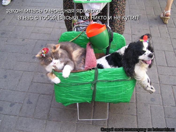 Котоматрица: закончилась очередная ярмарка, а нас с тобой,Васька,так никто и не купил!