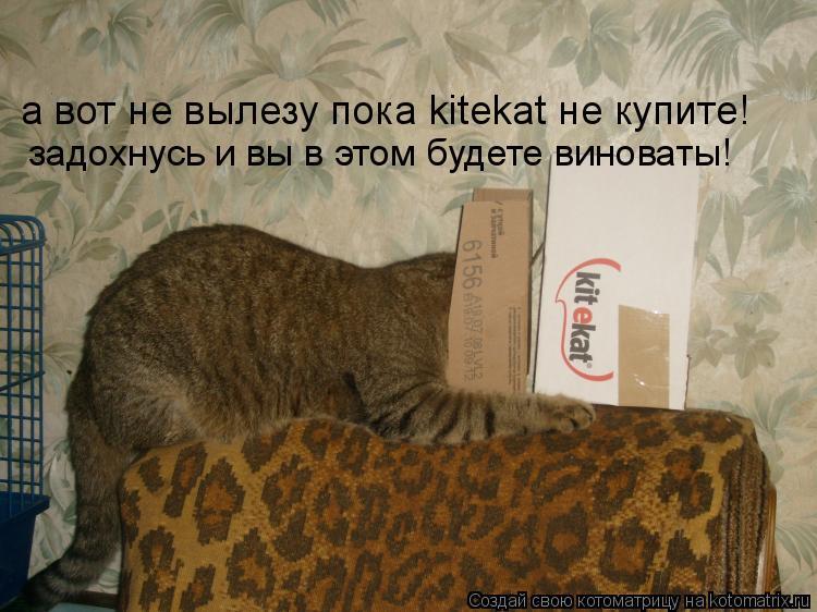 Котоматрица: а вот не вылезу пока kitekat не купите! задохнусь и вы в этом будете виноваты!