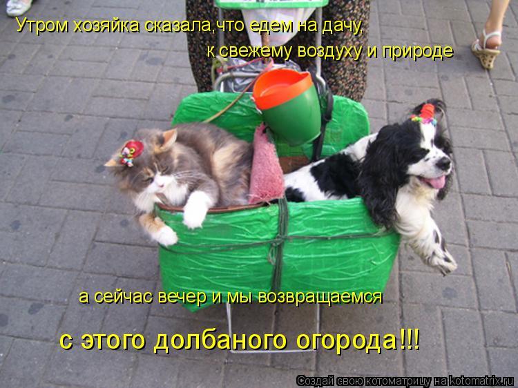 Котоматрица: Утром хозяйка сказала,что едем на дачу,  к свежему воздуху и природе а сейчас вечер и мы возвращаемся с этого долбаного огорода!!!