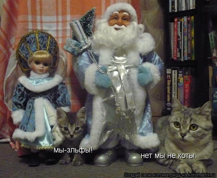 Котоматрица: нет мы не коты. мы-зльфы!