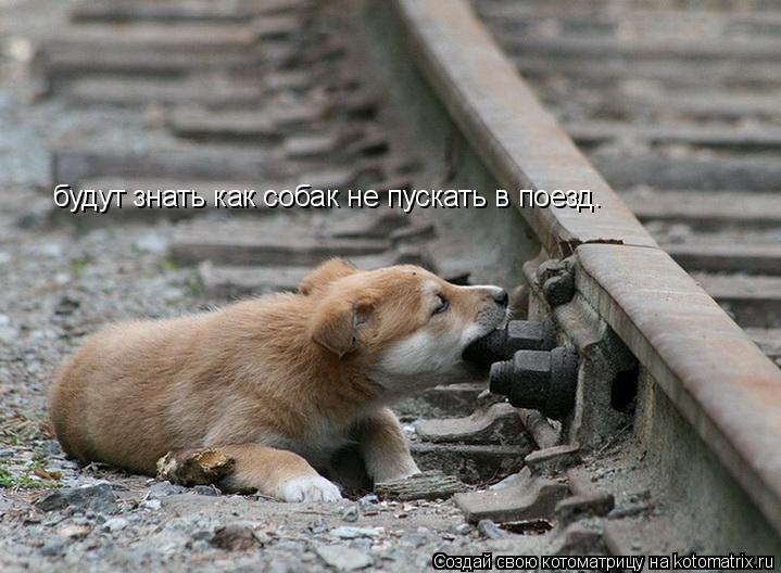 Котоматрица: будут знать как собак не пускать в поезд.