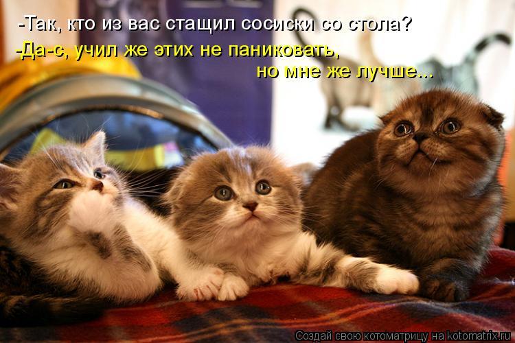 Котоматрица: -Так, кто из вас стащил сосиски со стола? -Да-с, учил же этих не паниковать,  но мне же лучше...