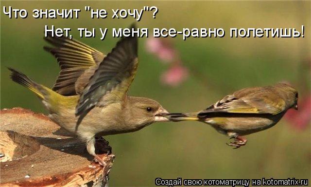 """Котоматрица: Что значит """"не хочу""""? Нет, ты у меня все-равно полетишь!"""