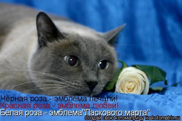 """Котоматрица: Чёрная роза - эмблема печали! Красная роза - эмблема любви! Белая роза - эмблема""""Ласкового марта"""""""