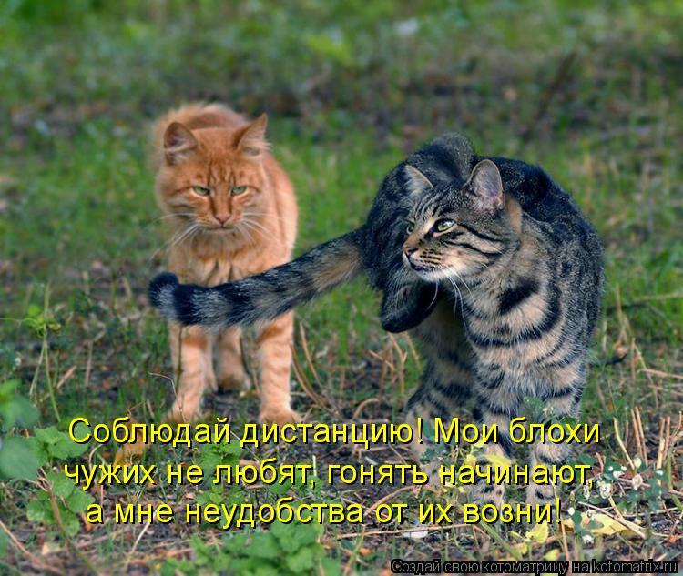 Котоматрица: Соблюдай дистанцию! Мои блохи  чужих не любят, гонять начинают, а мне неудобства от их возни!