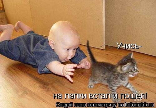 Котоматрица: Учись- на лапки встал-и пошел!